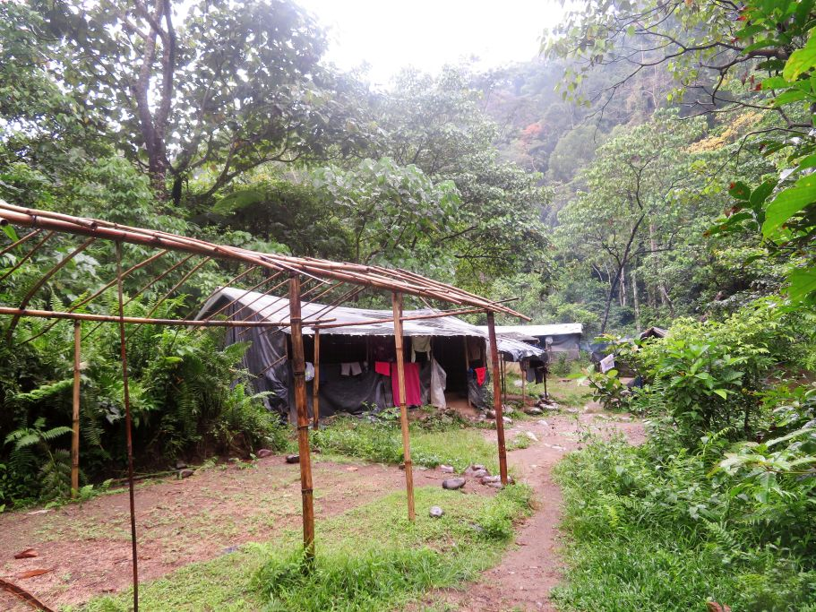 Dschungelcamp