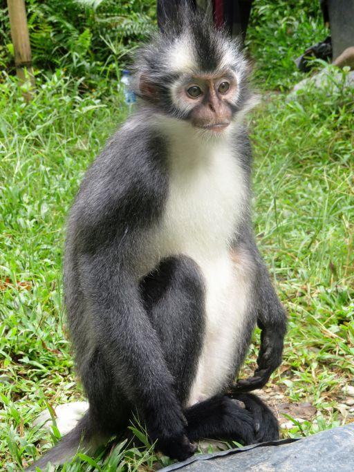 Fronkey the monkey