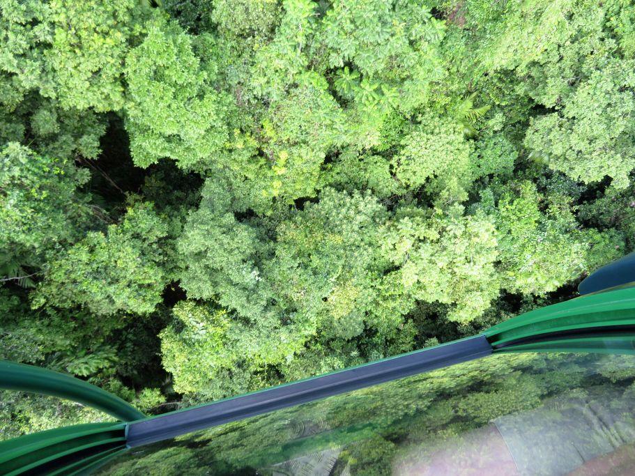 Canopy 1