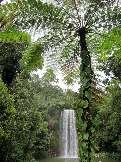 Wasserfall und Farn