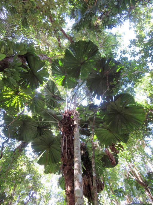 Wunderschöner Wald 1
