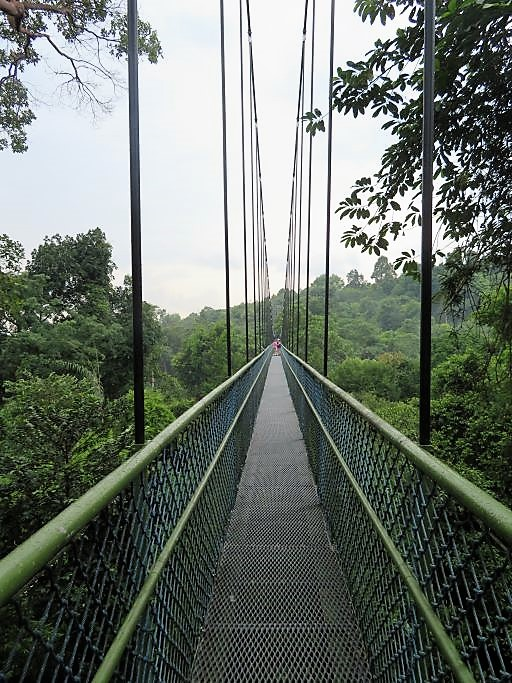 Canopy Walk Bridge 2