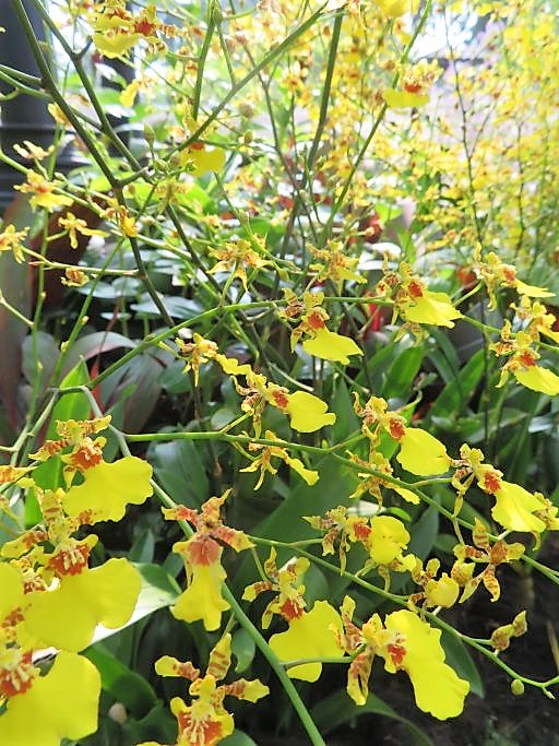 Ochideengarten 1