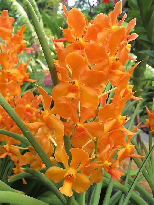 Ochideengarten 3
