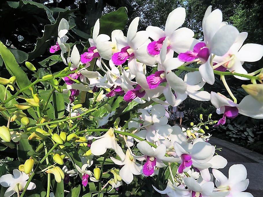 Ochideengarten 4