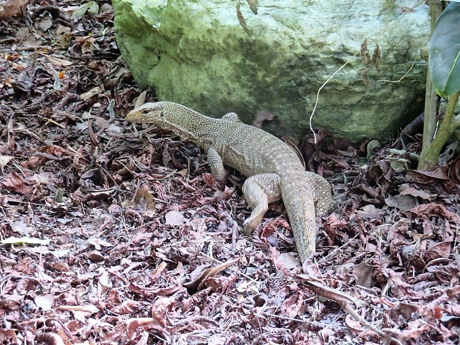 Singapore wildlife 1