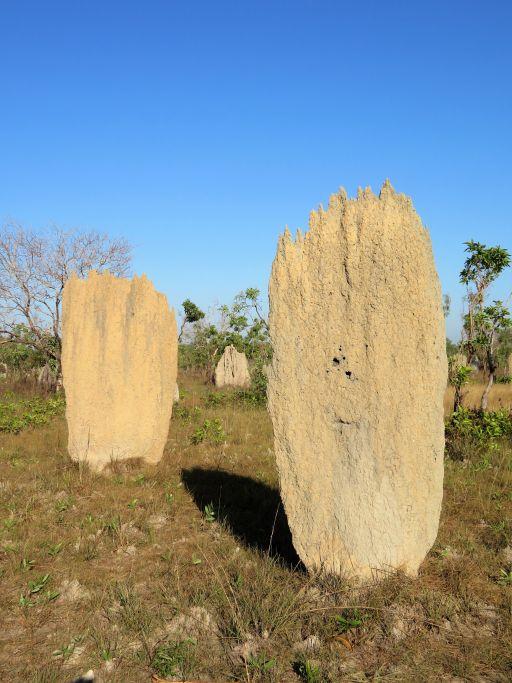 Termitenhügel 2