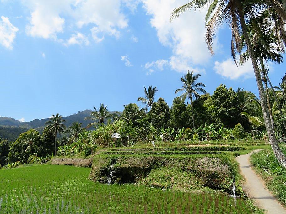 Reisfelder Munduk